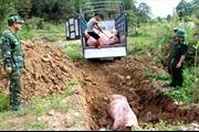 Quảng Ninh xử lý điểm nóng nhập lậu trước dịch tả lợn châu Phi
