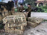 Nhập lậu gần 1 tấn mèo từ Trung Quốc về bán tại Thái Bình
