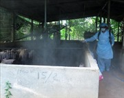 Các ngân hàng dành 357 tỷ đồng hỗ trợ nông dân bị ảnh hưởng dịch tả lợn châu Phi