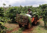 Vốn chính sách chung sức xây dựng nông thôn mới ở Đắk Nông