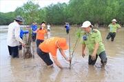 2.000 cây bần được FPT Software ươm mầm tại rừng ngập mặn Sóc Trăng