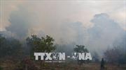 Tích cực dập lửa cháy rừng thông tại Nam Đàn, Nghệ An