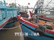 Các tỉnh, thành phố Bắc bộ từ Nghệ An trở ra chủ động ứng phó với bão số 6