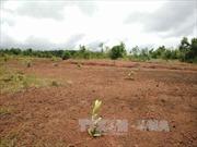 Kỷ luật cảnh cáo Chủ tịch xã buông lỏng quản lý Nhà nước về tài nguyên đất