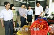 Hà Nội xử phạt hơn 14 tỷ đồng các cơ sở vi phạm an toàn thực phẩm