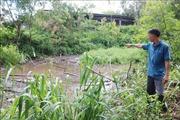 Người dân Đắk Lắk bức xúc vì cơ sở chăn nuôi lợn gây ô nhiễm