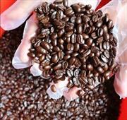 'Ngày cà phê Việt Nam' sẽ diễn ra tại Đắk Nông từ ngày 9 - 12/12