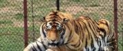 Trung Quốc cấm sử dụng, buôn bán hổ và tê giác