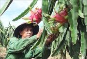 Giải bài toán phân phối nông sản - Bài 2: Giữ thế cạnh tranh