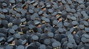 Nạn quấy rối tình dục trở nên nghiêm trọng tại các học viện quân sự Mỹ