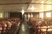Hải Phòng, Tây Ninh triển khai kế hoạch ứng phó với bệnh tả lợn châu Phi