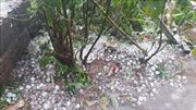 Mưa đá kèm gió mạnh cấp 7 làm tốc mái nhiều nhà dân ở Lào Cai