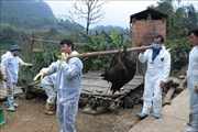 Đồng loạt kiểm tra các điểm thu gom, tập kết ngăn chặn dịch tả lợn châu Phi