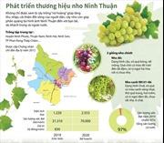 Phát triển thương hiệu nho Ninh Thuận
