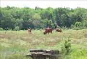 Mong mỏi nền tái định cư dự án Công viên Sài Gòn Safari