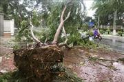Hải Phòng: Theo dõi chặt diễn biến thời tiết, tránh sự cố sau bão số 2