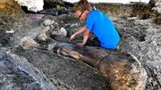 Phát hiện hóa thạch xương khủng long khổng lồ ở Pháp