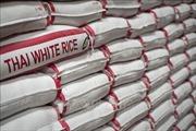 Giá gạo Thái Lan tăng mạnh lên 406- 425 USD/tấn
