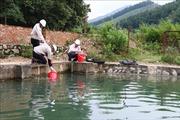 Vụ xả dầu thải gây ô nhiễm nguồn nước sông Đà: Cần kiểm soát chặt chẽ nguồn nước đầu vào