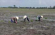 Cấp nước cho vụ Đông Xuân 2020 gặp nhiều khó khăn
