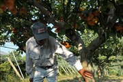Singapore dỡ bỏ lệnh cấm nhập khẩu thực phẩm từ tỉnh Fukushima, Nhật Bản