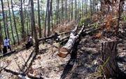 'Nóng'tình trạng phá và rao bán đất rừng ở Phi Liêng, Lâm Đồng