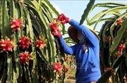 Xây dựng thị trường đa dạng để tiêu thụ nông sản cho nông dân