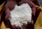 Tổng cục Hải quan gửi văn bản hỏa tốc hướng dẫn đăng ký tờ khai xuất khẩu gạo nếp