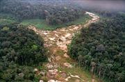 Rừng Amazon tiếp tục bị tàn phá nghiêm trọng