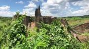 Đã tìm được đối tượng phá rừng tại Nông lâm trường Tân Lập, Bình Phước
