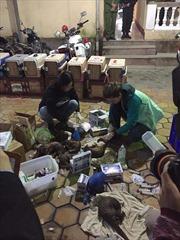 Giải cứu 215 con tê tê, bắt giữ 9 đối tượng buôn bán động vật quý hiếm