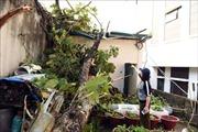 Mưa đá, dông lốc gây thiệt hại tại nhiều tỉnh phía Bắc
