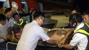 Máy bay trực thăng đưa hai ngư dân gặp nạn ở Trường Sa về đất liền cấp cứu