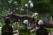 Hà Nội khẩn trương khắc phục hậu quả cây xanh bị gẫy, đổ do bão số 3