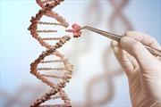 Chỉnh sửa gen - Liệu pháp hiệu quả giúp ngăn ung thư vú phát triển