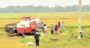 Tái cơ cấu nông nghiệp gắn với xây dựng nông thôn mới - Bài 1: Liên kết phát triển cây trồng chủ lực