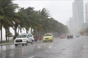 Bão số 5 gây mưa gió lớn, hàng loạt cây xanh bị gãy đổ tại Đà Nẵng