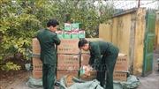 Biên phòng Lào Cai thu giữ gần 700 kg pháo hoa lậu