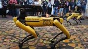 Xem chó robot trổ tài nhảy theo nhạc
