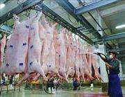 Sớm có chính sách khuyến khích thu mua lợn sạch để tiêu thụ và cấp trữ đông