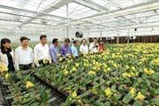 Trồng hoa vùng đồng bằng sông Hồng cho thu nhập 500 triệu đồng/ha
