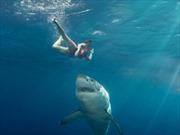 Hai trẻ em suýt mất mạng vì bị cá mập tấn công ngay tại New York