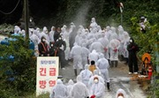 Hàn Quốc điềulính bắn tỉa săn lợn nhiễm bệnh tả châu Phi