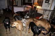 Cảm động người phụ nữ cưu mang 97 con chó trong siêu bão Dorian