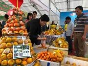 Cam quýt Bắc Kạn sắp 'đổ bộ' về tại Hà Nội