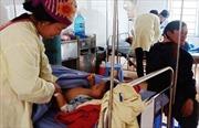 Một trẻ 7 tuổi tử vong, 3 cháu khác cấp cứu do ăn sắn sống
