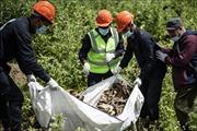 Tìm thấy trên 200 thi thể bị bắn vào đầu trong hố chôn tập thể tại Syria