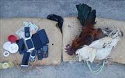 Triệt phá trường đá gà ăn tiền trong rừng thông Lâm Đồng