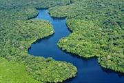 Diện tích rừng Amazon bị phá lên mức cao nhất trong 10 năm qua