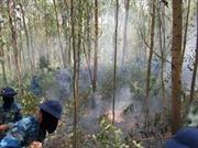 Dập tắt đám cháy tại Vườn quốc gia Hoàng Liên - Lào Cai